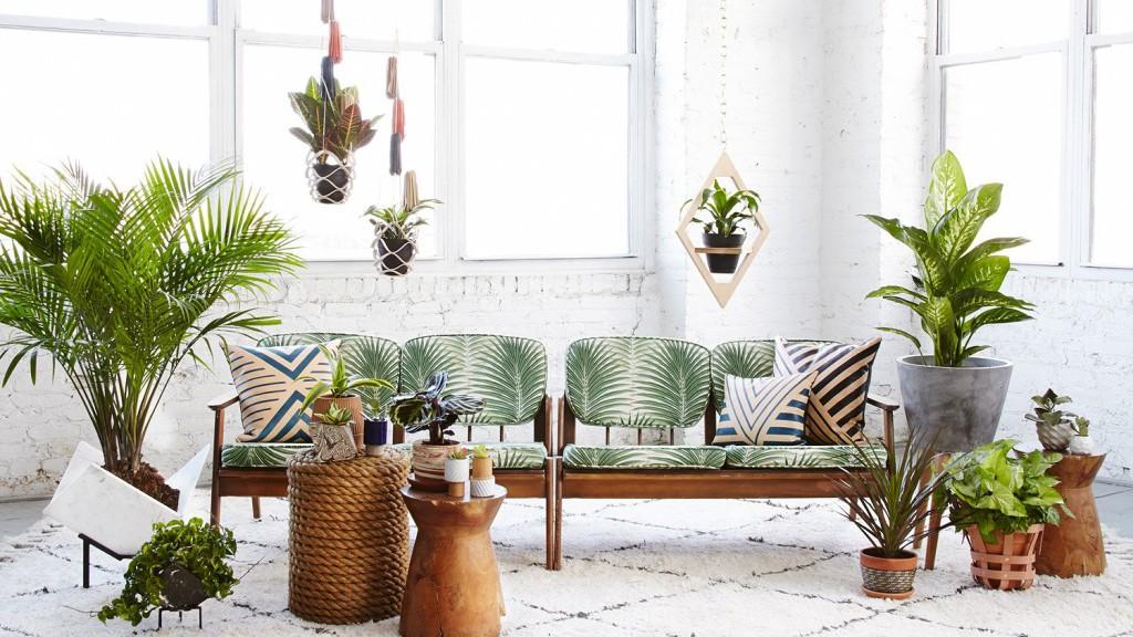 plantes-dépolluantes-pour-une-maison-limmovation