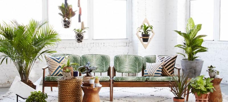 Conseil plantes dépolluantes pour une maison dracena ficus fleur de lune