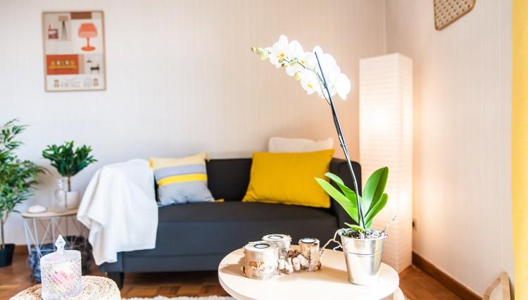 A vendre appartement Montauban valorisation immobilière home staging