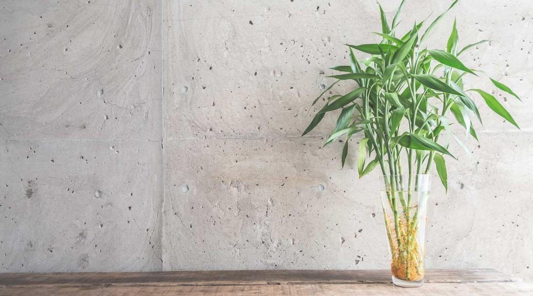 Conseil plante bambou